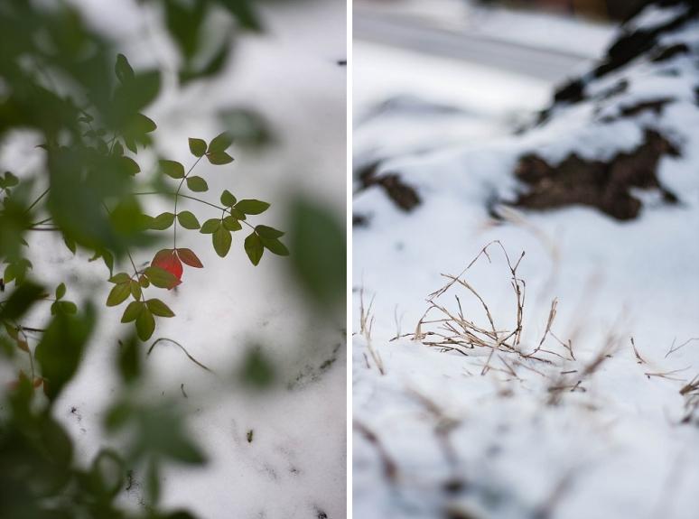 red leaf through bush