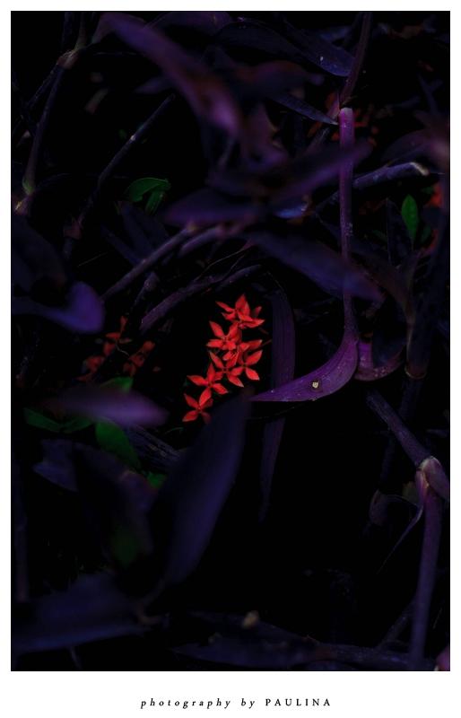 red flower wildlife in mazatlan mexico photo